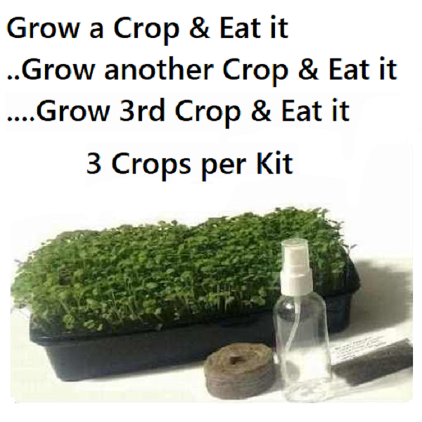 Salad Ballad Microgreen Kit Growing
