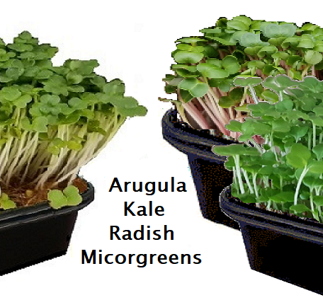 Salad Ballad Microgreen Kit